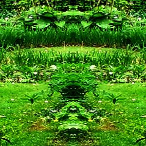 GreenCut1