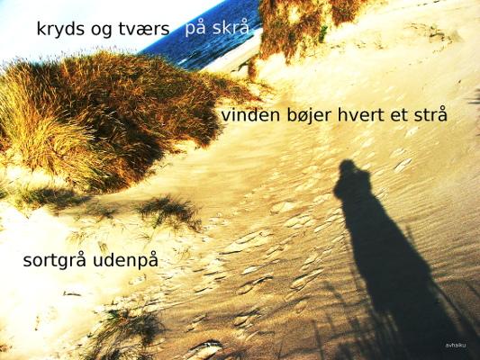 Anne Voel vink2